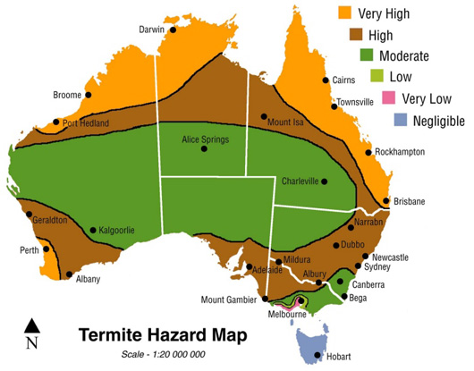 10-Unknown-Facts-About-Termites-AUSInspections -- pest inspections Sydney