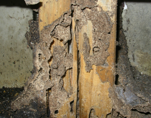 10-Unknown-Facts-About-Termites-AUSInspections -- Sydney Pest Inspections