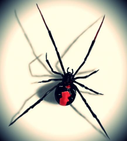 Redback-Spider-AUS-Inspections